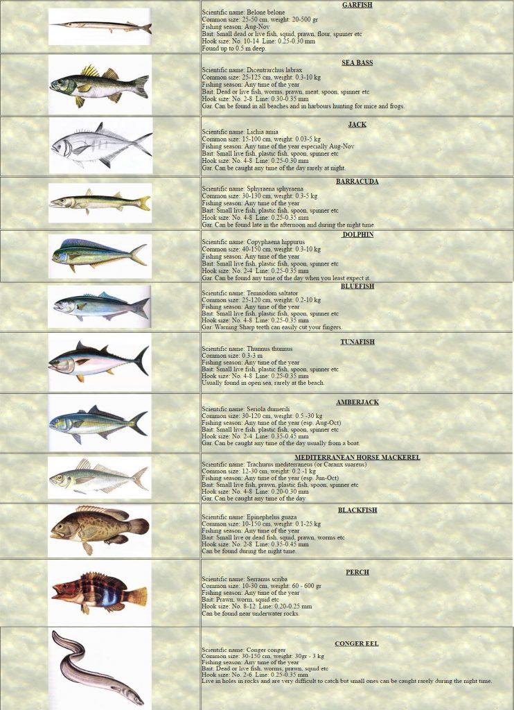 Pg1 Fishing(Angling)